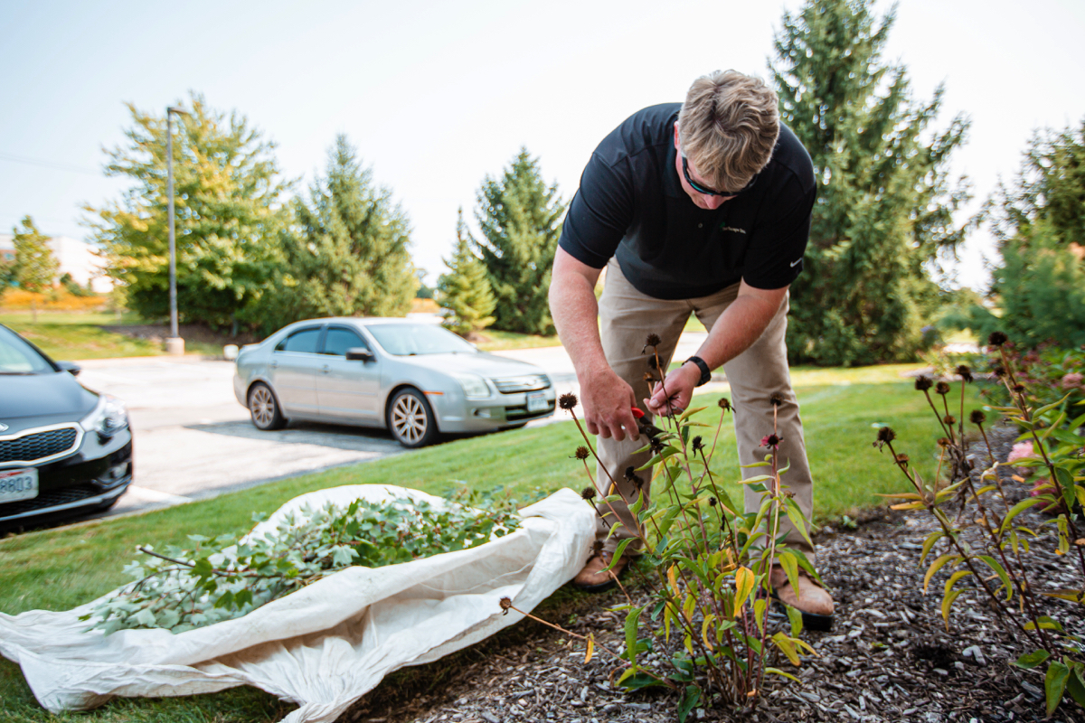 commercial landscaping professional cuts back perennials for winter