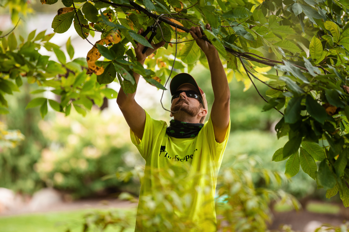 Commercial Landscaping Crew pruning HOA trees