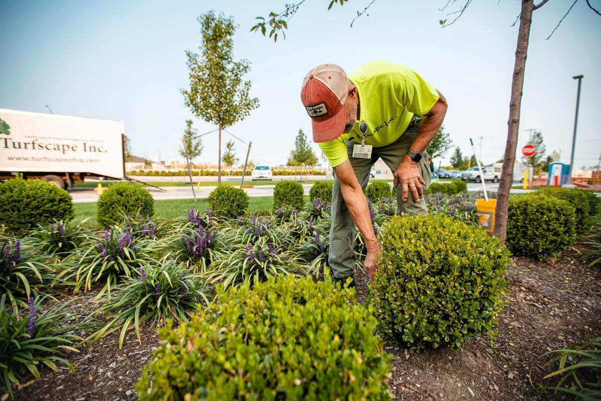 Regular maintenance performed on shrubs and perennials