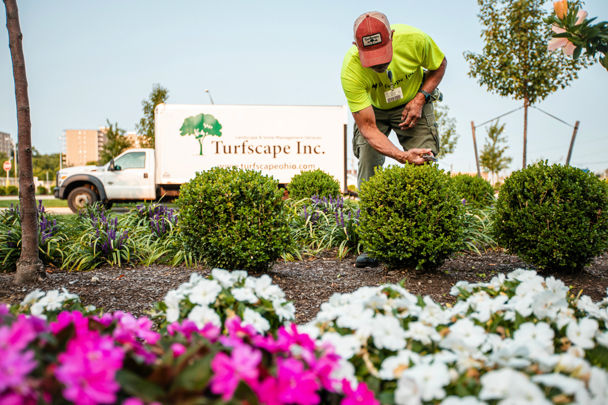 Commercial Landscaping with shrubs, perennials and annuals