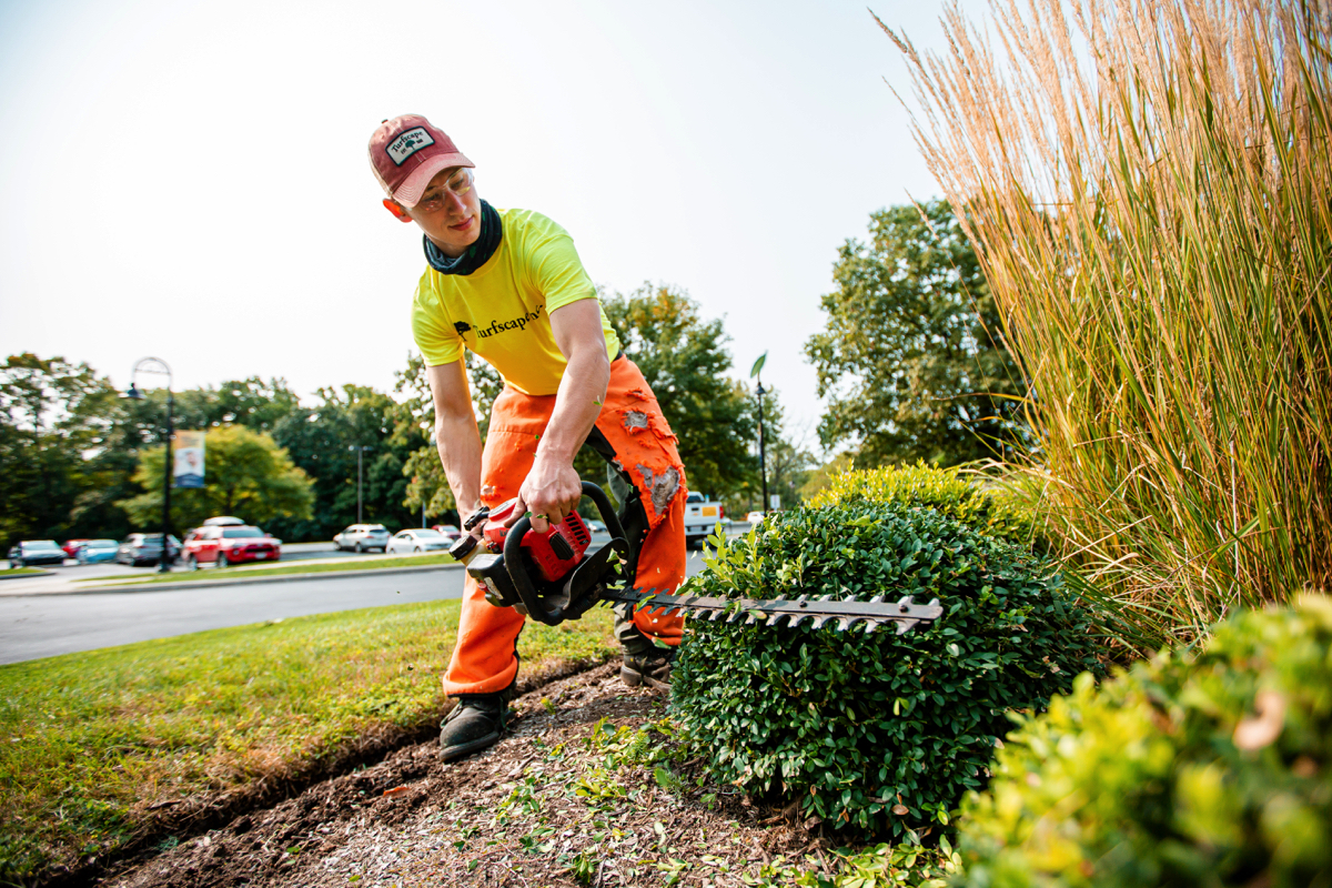 Commercial Landscaping Maintenance Crew Hedge Trimmer Boxwood trimming grasses 2