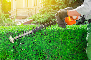 Commercial Landscaping Services for Spring - Planting