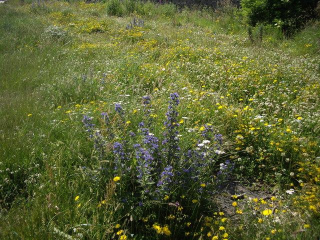 Sustainable landscaping wildflower garden