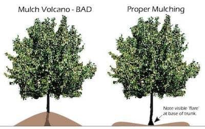 Mulching Volcano.jpg