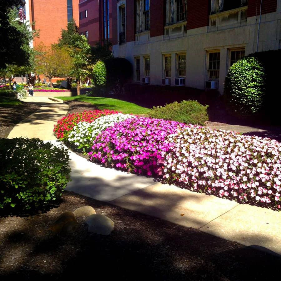 School pathway with landscape enhancements