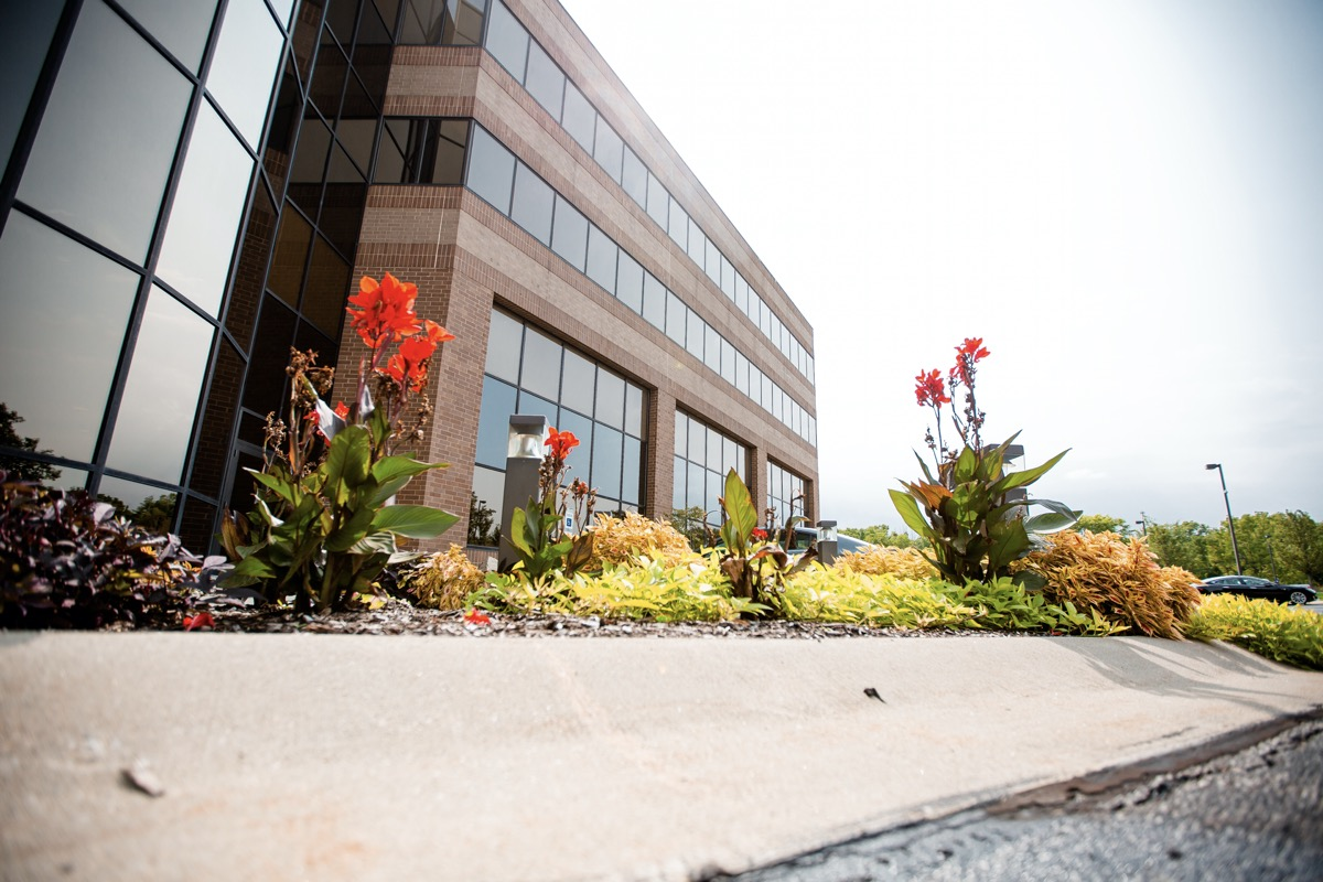 Commercial building entrance with annual planting