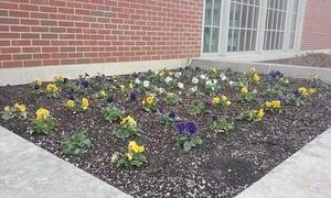 flower bed john carroll university