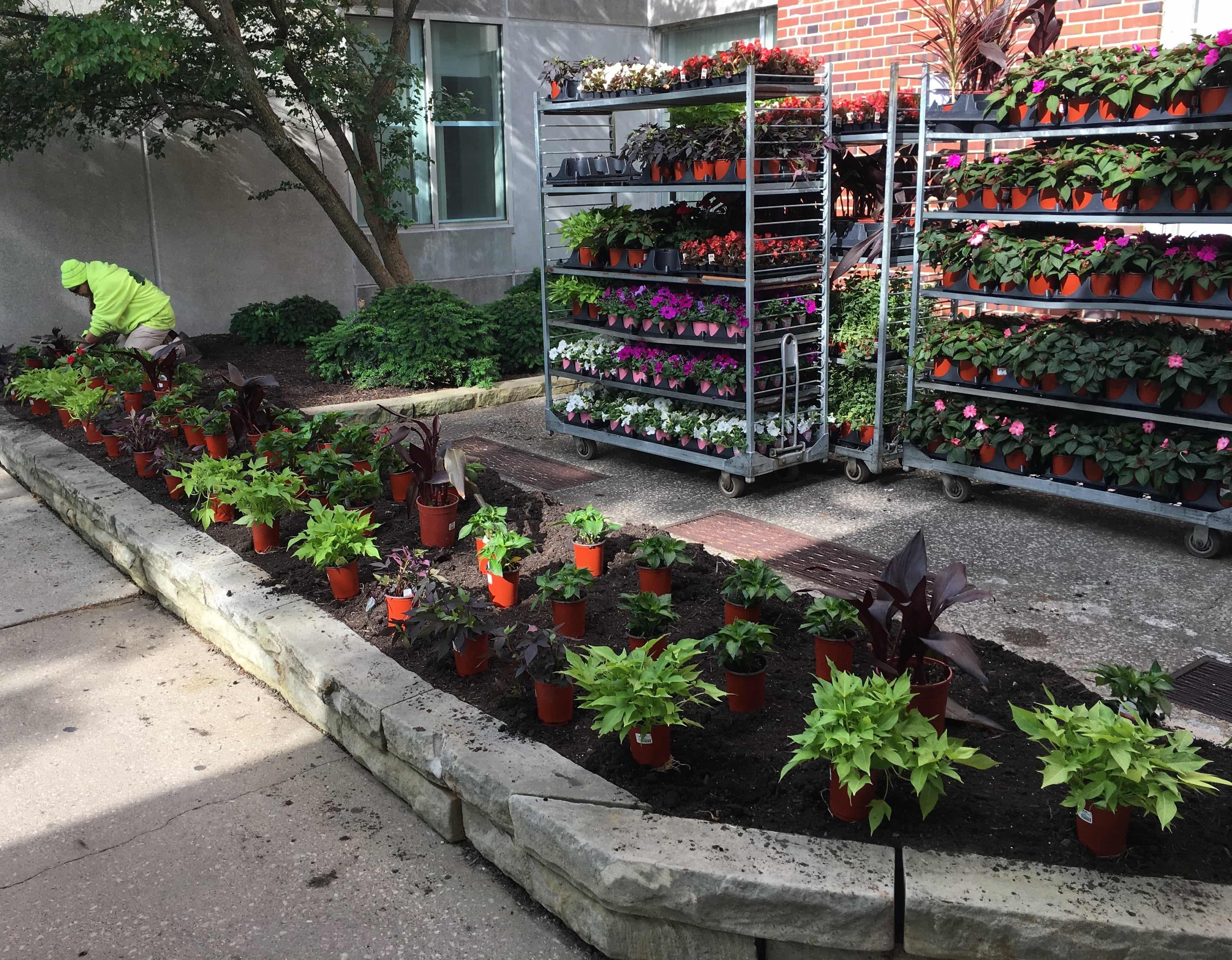 Landscape crews installing annuals