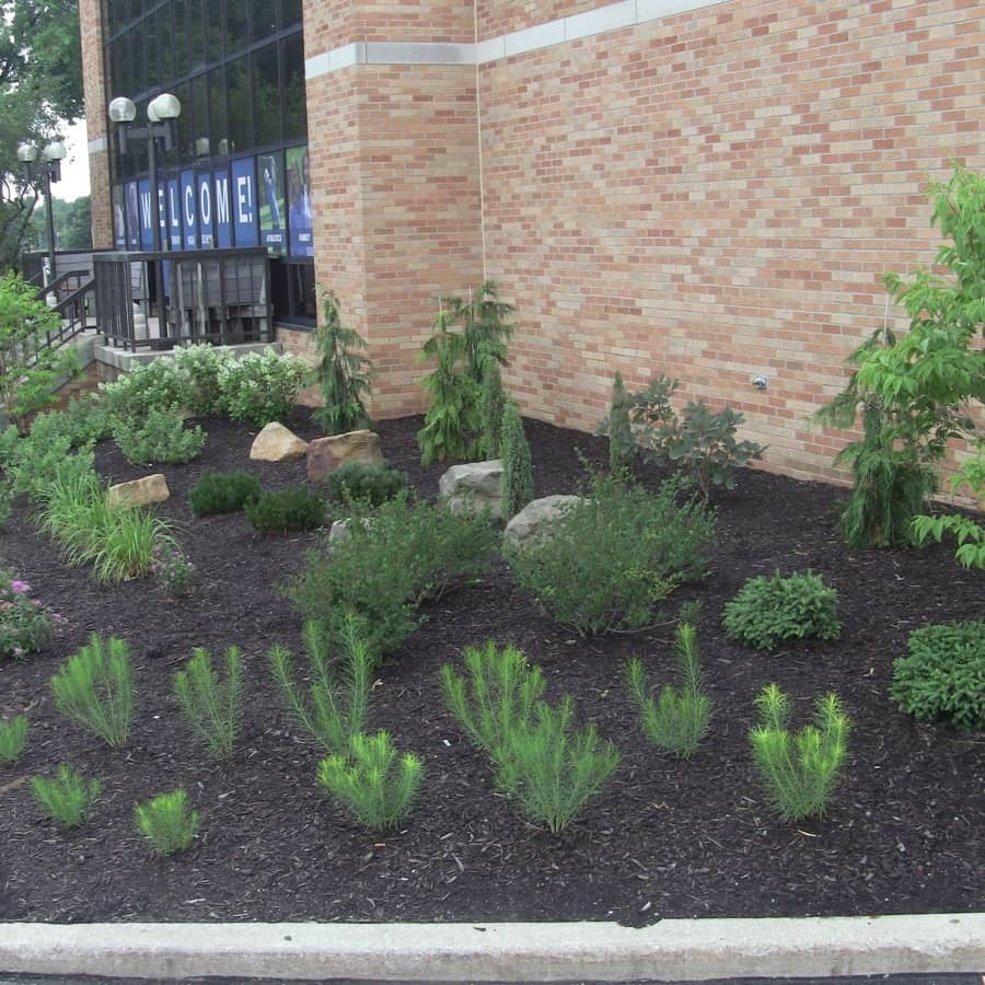 landscaping plants on college campus