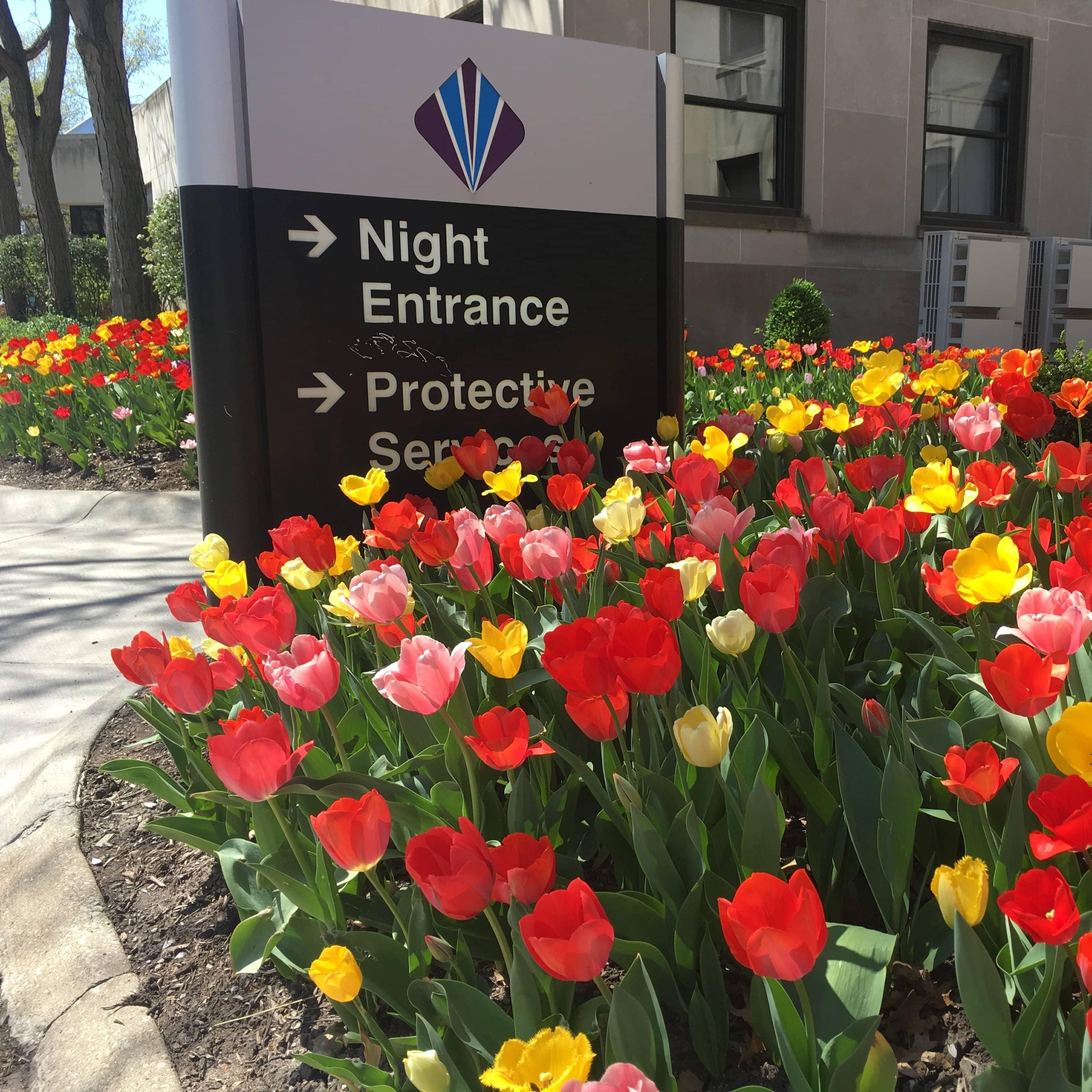 Spring landscape enhancements