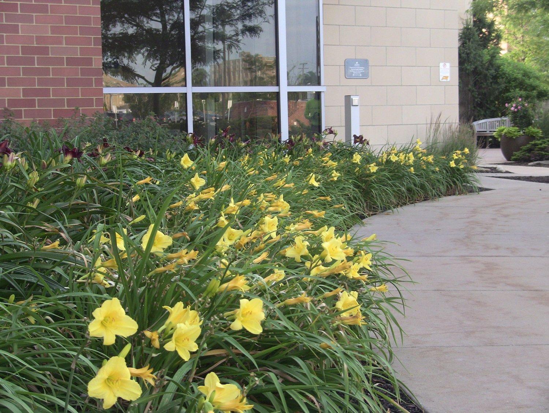 Flowers along walkway on hospital landscape