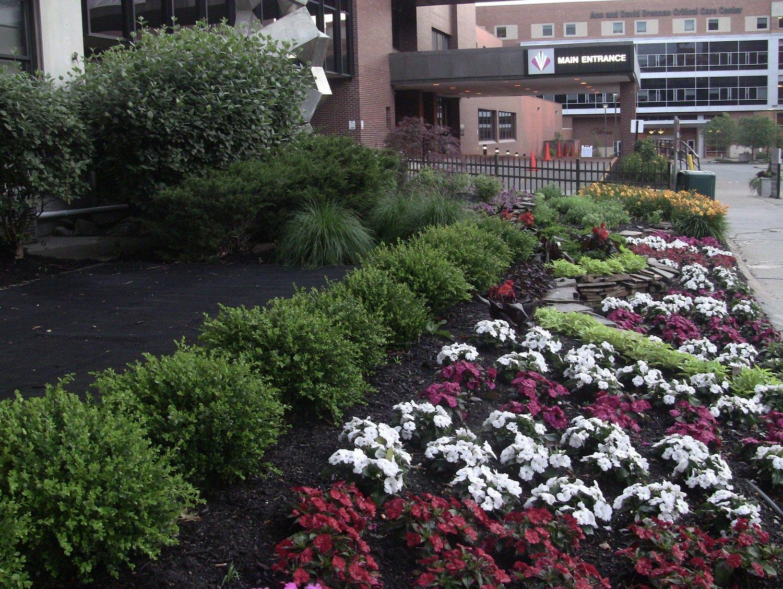 Hospital landscaping near entrance