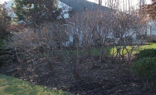 pruning-after.jpg