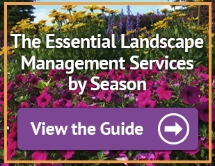 The essential landscape management services by season