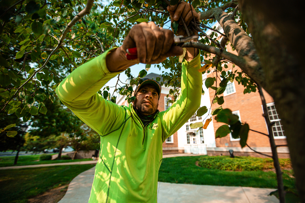 How to Plan For Tree Care Needs at Your HOA