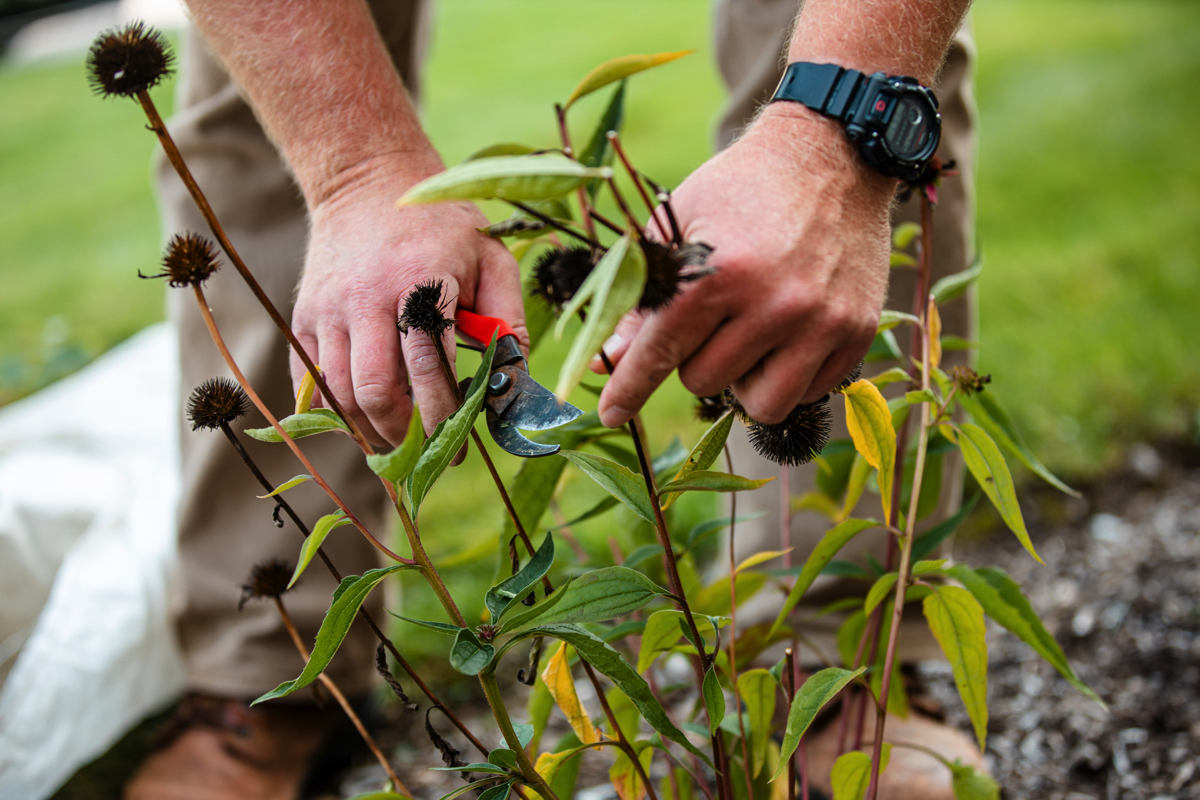 What To Know About Dormant Pruning
