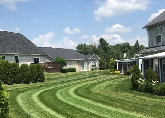 The Best Lawn Maintenance Program for Weed Control & Fertilization