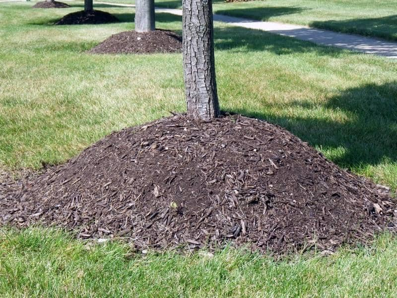 Are You Over-Mulching Your Trees?