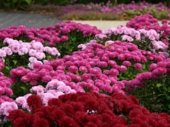 Quick Tips for Fall and Spring Landscape Beautification