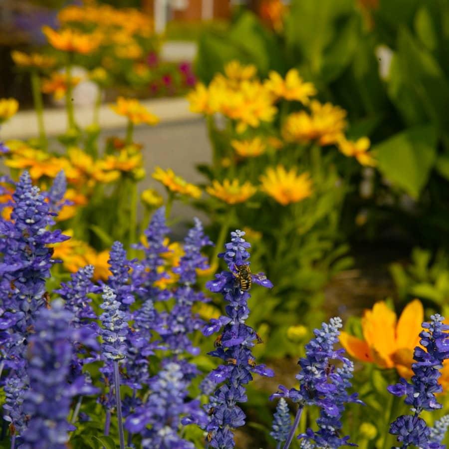 commercial grounds maintenance flower closeup