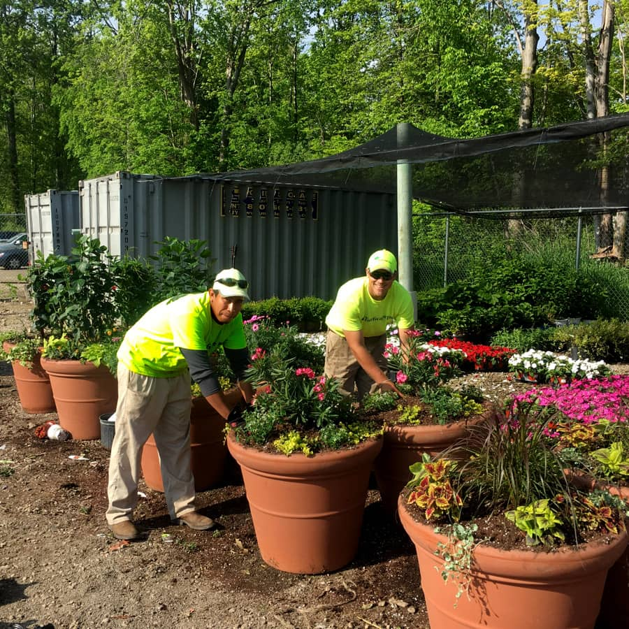 commercial grounds maintenance potted plants
