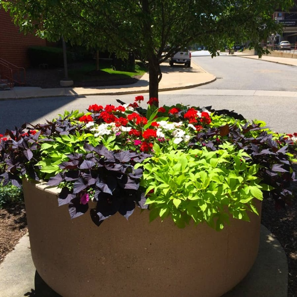 commercial grounds maintenance potted flowers