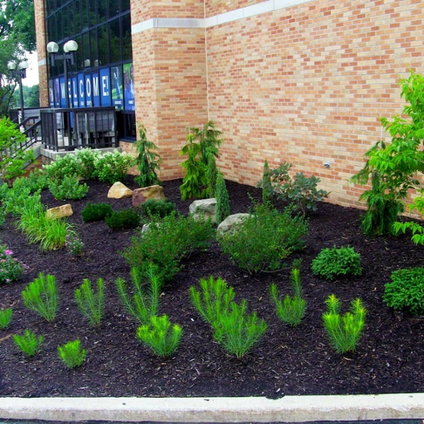 commercial landscaping plants in bed