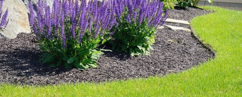 Bed Edging: The Right Way!