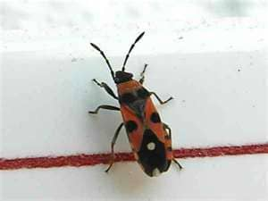How To Control Surface Insect Damage