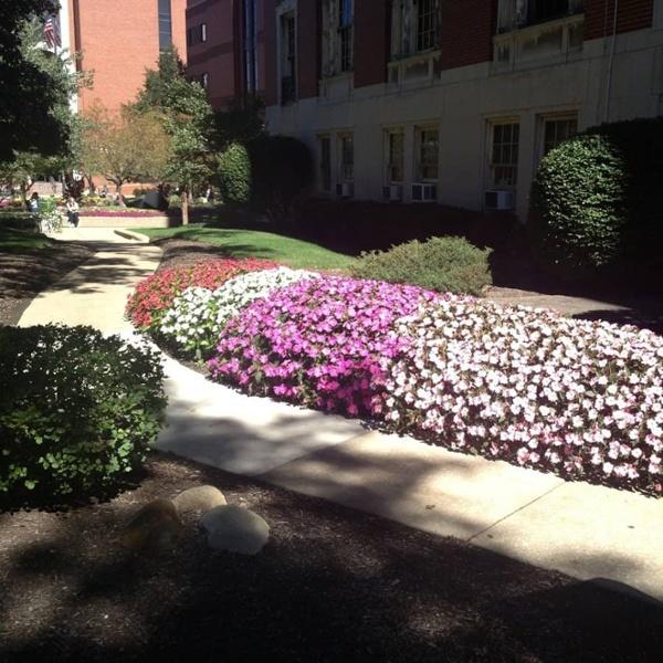 commercial grounds maintenance condo