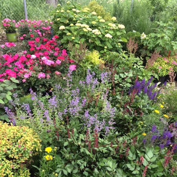 commercial grounds maintenance flower bed