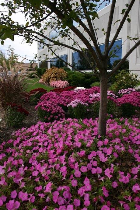 spring grounds maintenance