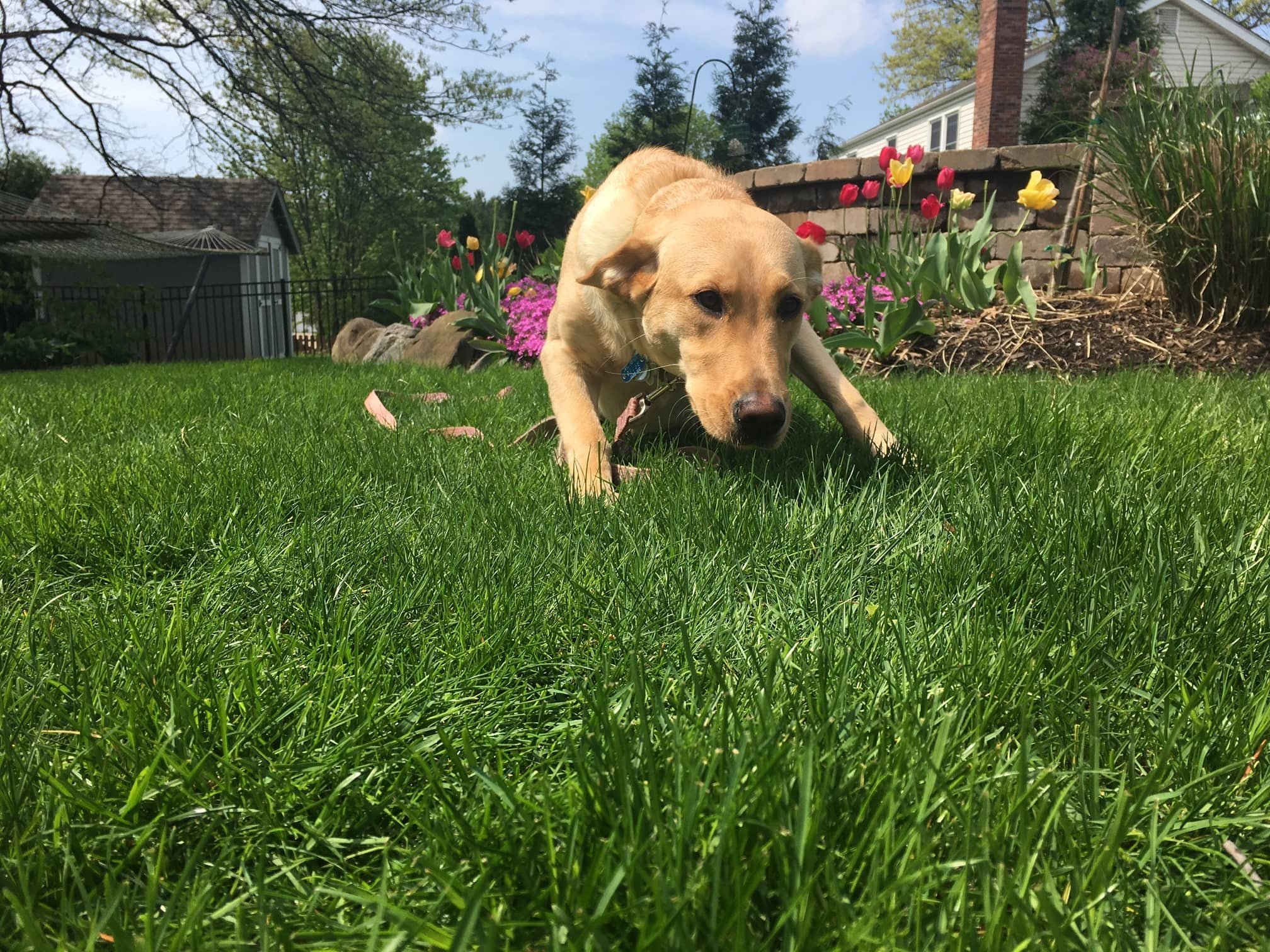 Practical Tips on Lawn Care (From a Landscaper and Pet Owner)